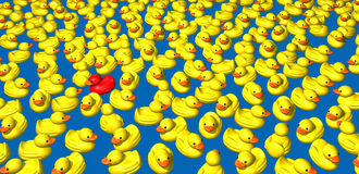 Yellow ducks Royalty Free Stock Image