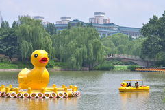 Yellow Ducks in Black Bamboo Park in Beijing Stock Image