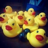 Yellow ducks Stock Image