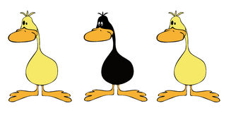 Yellow ducks group with one black. Royalty Free Stock Photo