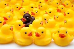 Yellow ducks Royalty Free Stock Photo