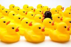 Yellow ducks Royalty Free Stock Photography