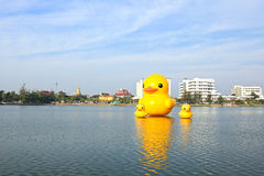 The yellow ducks is the most populars view for photos. Royalty Free Stock Photos
