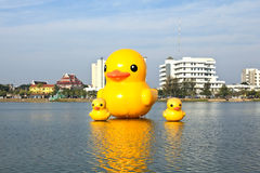 The yellow ducks is the most populars view for photos. Stock Images