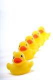 Yellow ducks Stock Photos