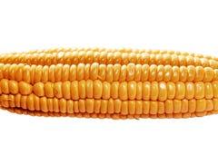 Yellow ear of corn Stock Image