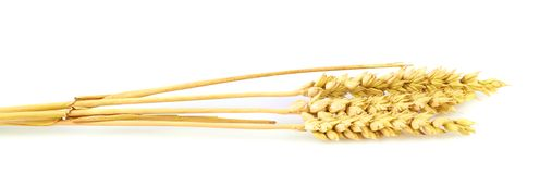 Yellow ear of wheat Royalty Free Stock Images