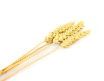 Yellow ear of wheat Stock Image