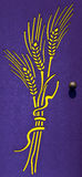 Yellow ears of corn on a violet door Stock Images
