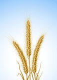 Yellow ears of wheat Stock Photo