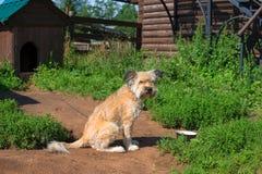 Yellow earth sentry dog Royalty Free Stock Image