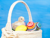 Yellow Easter chick in a basket Stock Photos