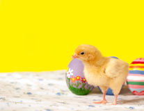Yellow Easter chick with colorful eggs Stock Images