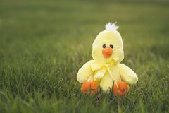 Yellow Easter Chick Royalty Free Stock Images