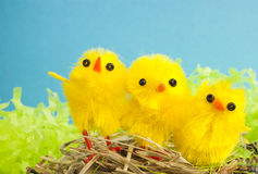 Yellow Easter chickens Royalty Free Stock Images