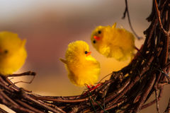 Yellow easter chickens dancing on some twigs Royalty Free Stock Images