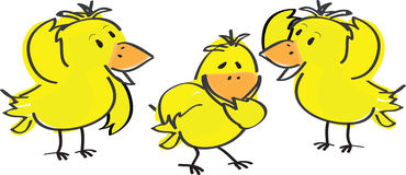 Yellow Easter chicks Royalty Free Stock Photo