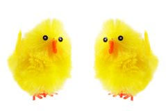 Yellow easter chicks Royalty Free Stock Image