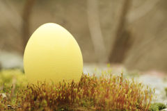Yellow easter egg Royalty Free Stock Photo
