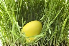 Yellow easter-egg Stock Image