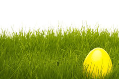 Yellow easter egg in grass Royalty Free Stock Photo