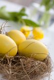 Yellow easter eggs Stock Image
