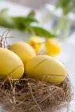 Yellow easter eggs stock image