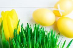Colorful Easter eggs, decorative greens and tulip on white wooden background royalty free stock photo