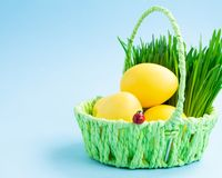 Colorful Easter eggs in a basket with decorative grass. Blue background. Easter holiday concept stock photos