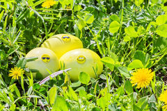 Yellow Easter eggs in green grass Royalty Free Stock Photography