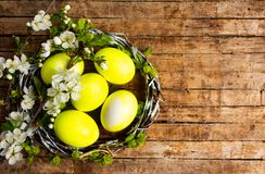 Yellow Easter eggs and spring blossom flowers. Top view nest organic bloom bright cherry celebration tree craft still life festive april decorative season food stock photography