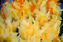 Yellow easter feathers Stock Images