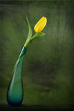 Yellow easter tulip card Royalty Free Stock Photos