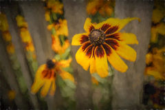 Yellow Echinacea flowers painting Royalty Free Stock Images
