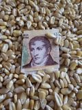 Argentina, maize producing country, dry corn grains and argentine banknote of ten pesos. Yellow edible seed, agriculture and harvest, world cereal production stock photo