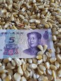 China, maize producing country, dry corn grains and chinese banknote of five yuan. Yellow edible seed, agriculture and harvest, world cereal production royalty free stock photo