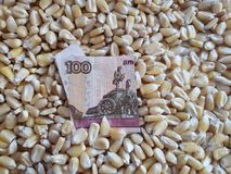 Russia, maize producing country, dry corn grains and russian banknote of 100 rubles. Yellow edible seed, agriculture and harvest, world cereal production stock photography