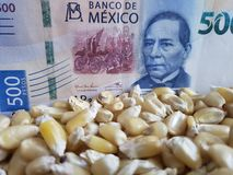 Mexico, maize producing country, dry corn grains and mexican banknote of 500 pesos. Yellow edible seed, agriculture and harvest, world cereal production stock photography