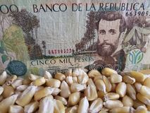 Colombia, maize producing country, dry corn grains and colombian banknote of 5000 pesos. Yellow edible seed, agriculture and harvest, world cereal production stock photo