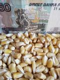 Russia, maize producing country, dry corn grains and russian banknote of fifty rubles. Yellow edible seed, agriculture and harvest, world cereal production stock photography