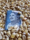 Colombia, maize producing country, dry corn grains and colombian banknote of 2000 pesos. Yellow edible seed, agriculture and harvest, world cereal production stock photo