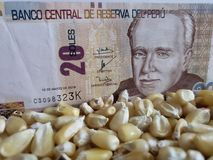 Peru, maize producing country, dry corn grains and peruvian banknote of twenty soles. Yellow edible seed, agriculture and harvest, world cereal production stock image