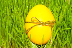 Yellow egg with bowknot on grass background Stock Photos