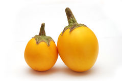 Yellow Eggplant. Two Thai yellow eggplant fruits on white background Royalty Free Stock Photos
