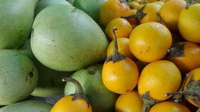 Yellow eggplant and Gourd Royalty Free Stock Photo