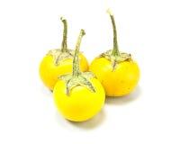 Yellow eggplant Stock Image