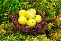 Yellow eggs in nest Royalty Free Stock Photography
