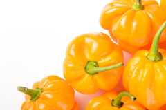 Yellow emperor pepper Stock Images
