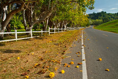Yellow exotic flowers on a tree and road Stock Photo
