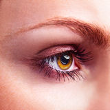 Yellow eye Royalty Free Stock Images